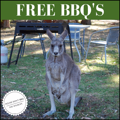 Free BBQ's, with occasional marsupial visitor